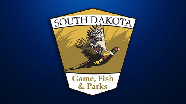South Dakota Agency Find Two-Thirds Of Deer Fawns Survive