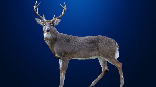 DNR: Hunters Should Get Deer Tested For Chronic Wasting Disease